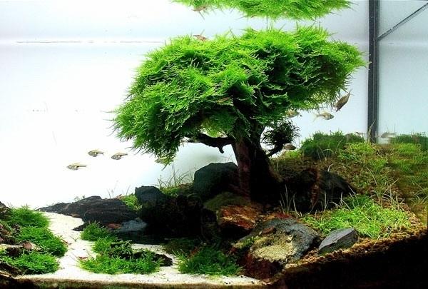 Legno bonsai per aquascaping acquario for Piante per acquario online