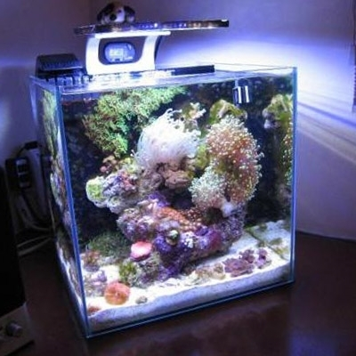 Meerwasser led licht zetlight nano zn1702 aquariumonline for Acquario shop online